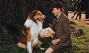 Фильмы и сериалы, сделавшие животных несчастными
