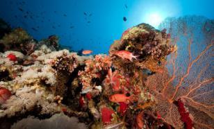 В Красном море обнаружили источник токсичных газов