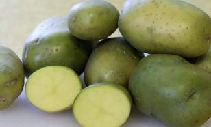 Бойтесь зеленого картофеля