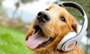 Как животные воспринимают музыку