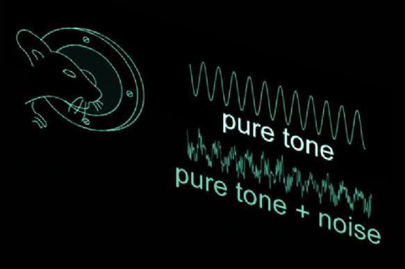 Белый шум и оптогенетика улучшили слух