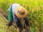 США добрались и до японских аграриев
