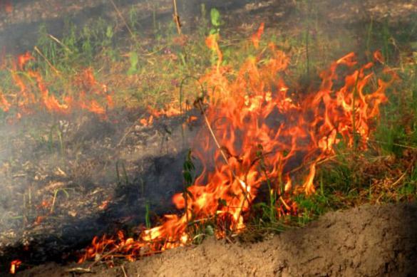 Удаление соломы огнем: безопасное сжигание травы