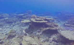 Глобальное потепление губит австралийский Большой Барьерный риф