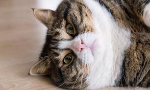 Как помочь домашнему животному в борьбе с лишним весом