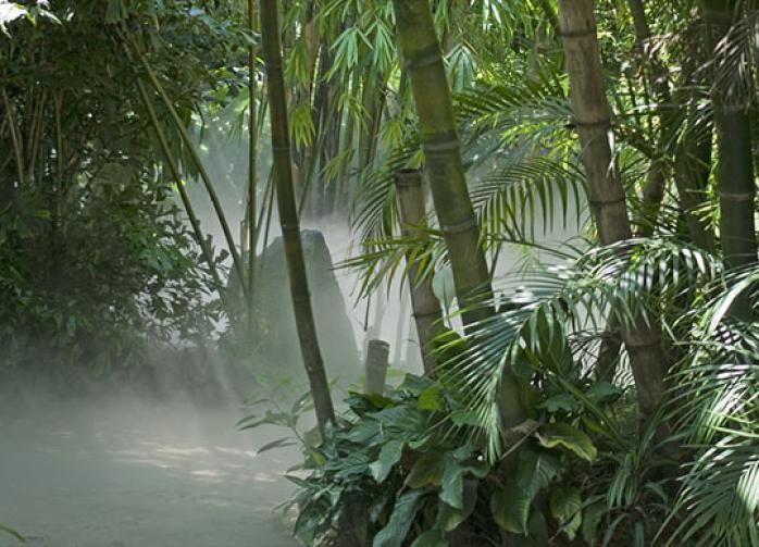 Учёные: следующая пандемия подстерегает нас в джунглях Борнео
