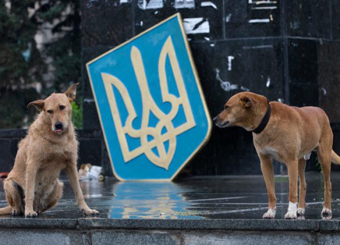 Сколько украинцев считают свою страну независимой, выяснили социологи