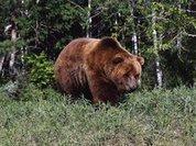 Дикий медведь пообедал в доме американской женщины
