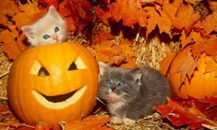 Как сделать Хэллоуин безопасным для домашних животных