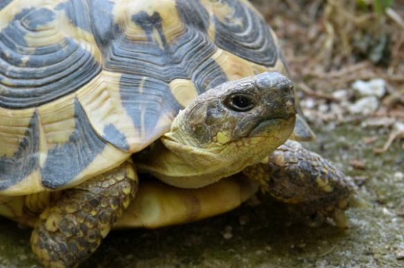 Завезенные контрабандой в Оренбург черепахи погибли от холода