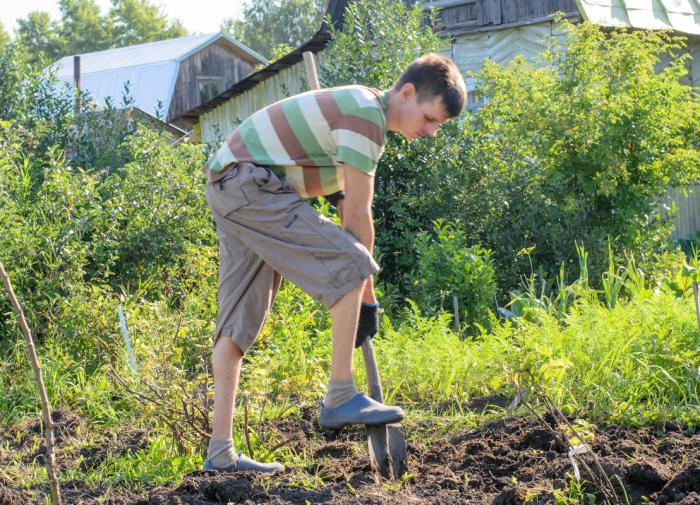 В России спрос на товары для сада и огорода вырос в четыре раза