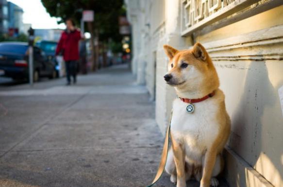 Китайское приложение позволяет найти потерявшихся собак по снимку носа