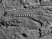 Палеонтологи ощипали чудо в перьях