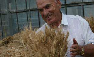 """""""Стеной стоит пшеница золотая…""""— та, которую создает великий селекционер Баграт Сандухадзе"""