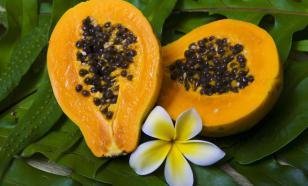 Как вырастить папайю дома