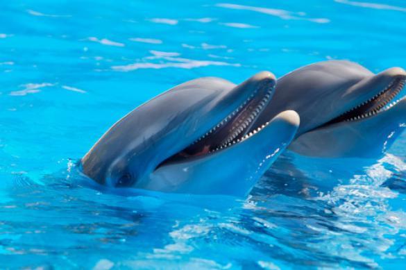 У дельфина Норда из татарстанского дельфинария появился опекун