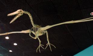 Палеонтологи установили возраст останков птиц, найденных в Антарктиде