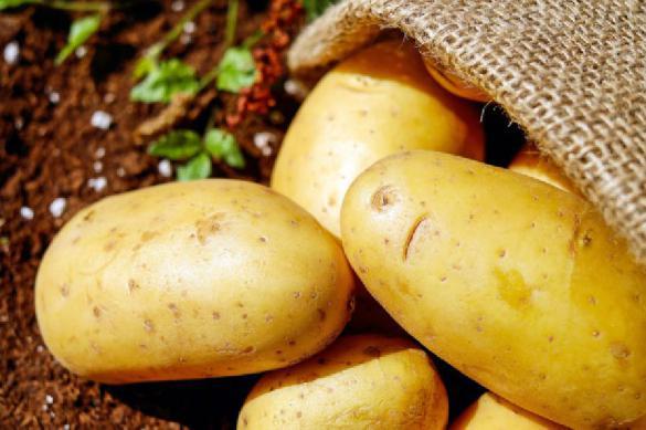 Медики рассказали о полезных свойствах картофеля