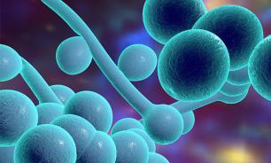 Новый опасный грибок, который не поддается лечению