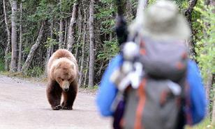 В Магадане дважды за сутки видели крупного медведя