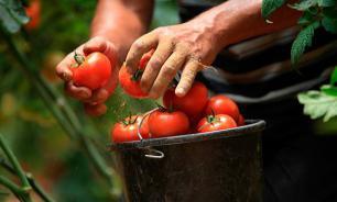 Садоводам и фермерам разрешат не платить налоги