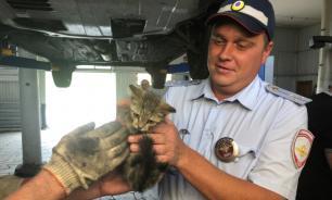 Полицейские Самары спасли котенка, который застрял в патрульной машине