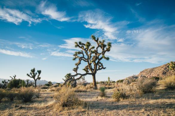 Экологи прогнозируют экстремальную жару к 2050 году