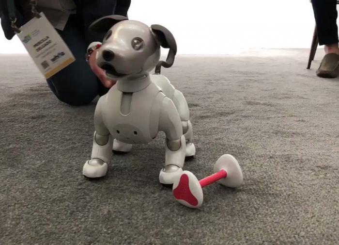 Роботы-собаки Spot поступили в открытую продажу