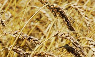 Россия продает больше зерна, чем оружия