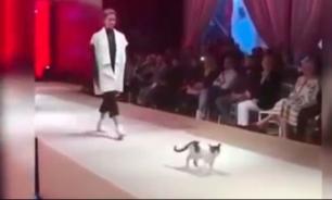 В Стамбуле кошка приняла участие в показе мод