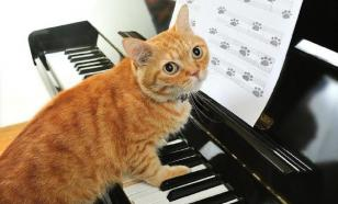 Для кошек написали антистрессовую музыку