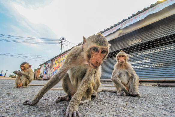 Укусы обезьян вошли в число самых частых жалоб туристов из РФ