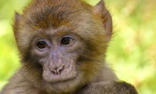 В Китае протестировали вакцину против коронавируса на обезьянах