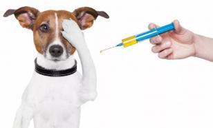 Болезни опорно-двигательной системы у собак