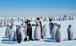 Ученые: глобальное потепление убивает пингвинов в Антарктике