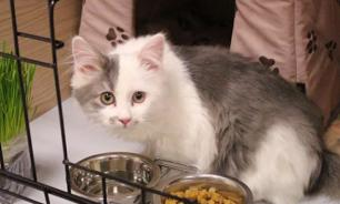 Отправляемся в путешествие: как оставить кошку в отеле для животных