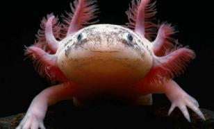 Странные и необычные животные, обитающие на планете