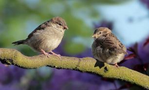 Биолог Александр Сорокин: бесснежная зима не опасна для птиц