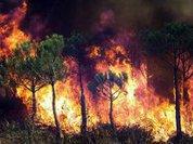 Русский лес дает пламя до небес