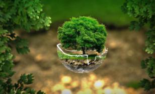 The Guardian: Пандемия возрождает экологию Земли