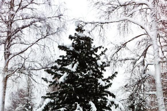 В Тюменской области перед Новым годом усиленно охраняют леса
