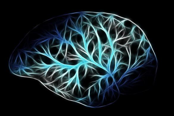 Интересные исследования человеческого мозга