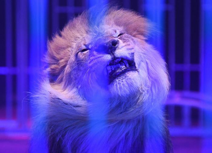 В ГД направлена инициатива от субъектов  запретить передвижные цирки