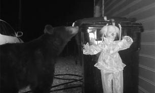 Мишку-воришку напугала кукла злого клоуна (видео)