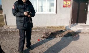 На Алтае браконьеры подкинули егерю трупы лосей