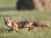 Депутат приравнял охотников к браконьерам