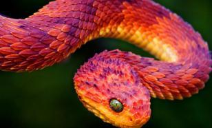 Мельница мифов: эти загадочные змеи