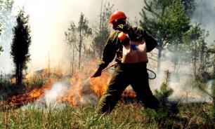 Авиалесоохрана: площадь лесных пожаров увеличилась