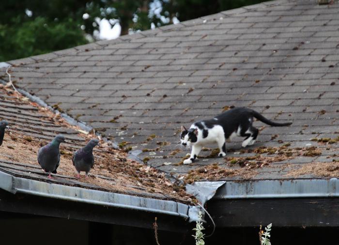 """Почему кошки """"стрекочут"""" при виде птиц?"""