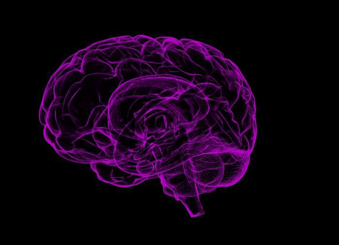 В 3D-печатном биореакторе вырастили мини-мозг